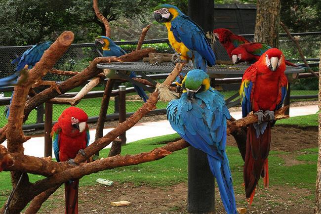Montecasino Bird Park