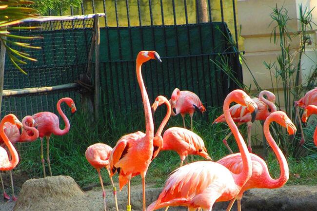 Montecasino and bird park